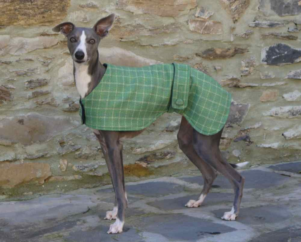 Green Whippet Dog Coat